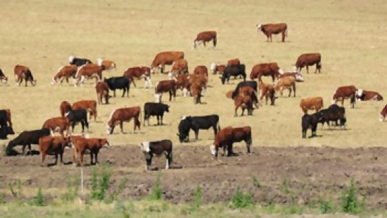 Agropecuaria de Cerro Largo y escritorios rurales destinarán recursos para el fondo Campo Solidario — Economía — Dinámica Rural | El Espectador 810