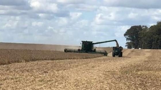 En algunas chacras hay rindes de 3.000 kgs/há, aunque no será el promedio, debido al déficit hídrico — Agricultura — Dinámica Rural | El Espectador 810