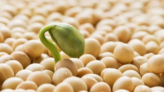 Á. Nuñez: Uruguay produce alimentos, 'si analizamos los productos de exportación, todo se origina en la semilla', dijo el nuevo presidente del INASE — Ganadería — Dinámica Rural | El Espectador 810