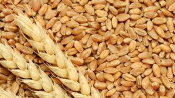 ADP se suma a la campaña 'Unidos para Ayudar', donando 100 mil kilos de trigo, que serán 75 mil kilos de harina — Economía — Dinámica Rural | El Espectador 810
