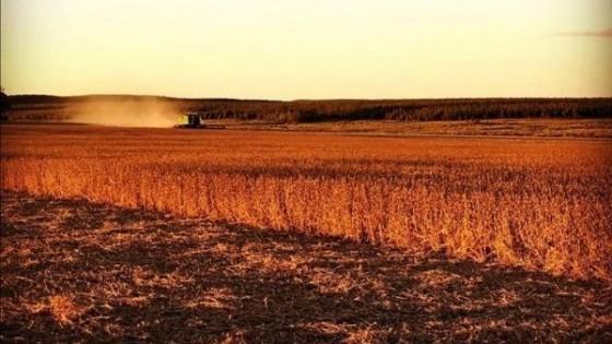 En Argentina, con una cosecha del 99%, la soja de primera alcanzó los 4.000 kgs/há — Agricultura — Dinámica Rural | El Espectador 810