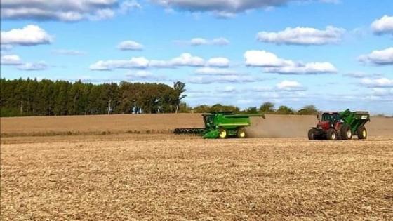 Proyección: Con un área en el entorno de las 9 mil hectáreas de soja, Copagrán estima rindes de entre 1.800 y 2.000 kilos en promedio — Agricultura — Dinámica Rural | El Espectador 810