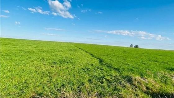 En Flores, Da Silva Agroinmuebles tiene a licitación 418 hás con aptitud agrícola, ganadera y forestal — Economía — Dinámica Rural | El Espectador 810