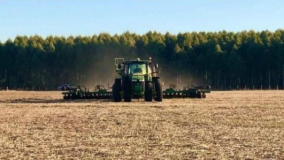Finalizó la cosecha de cultivos de verano, con rindes dispares — Agricultura — Dinámica Rural | El Espectador 810
