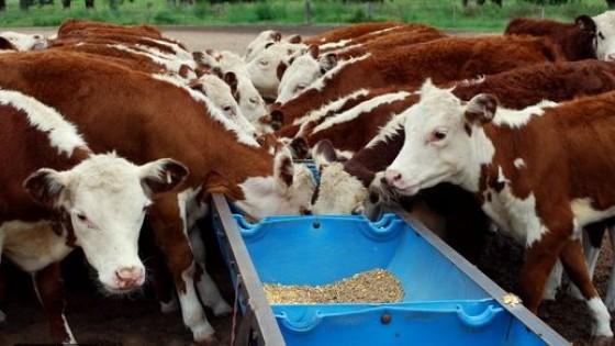 Ganadería eficiente: Recría de terneros y terneras en invierno bajo suplementación — Ganadería — Dinámica Rural | El Espectador 810