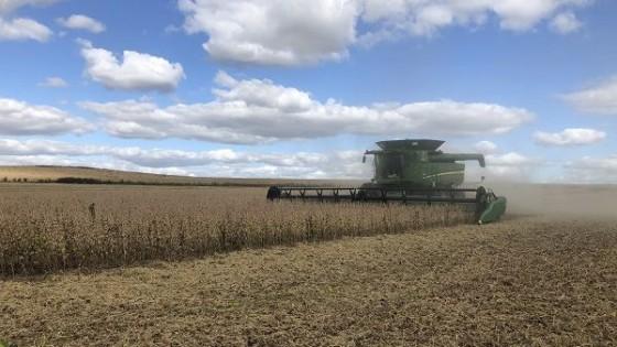 Soja: ADP cerraría la zafra de soja con 2200 kg por hectárea en promedio — Agricultura — Dinámica Rural | El Espectador 810