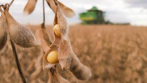 Soja: 'China seguirá comprando, pero intentará bajar los precios' — Agricultura — Dinámica Rural | El Espectador 810