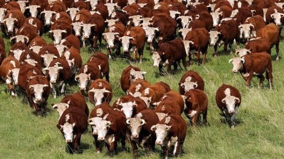 M. Despaux: 'Los ganados que se compran hoy, se pagan en la primavera que viene' — Ganadería — Dinámica Rural | El Espectador 810