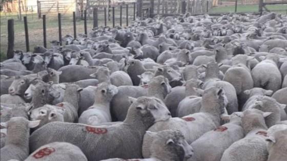 Covid-19, con impacto diferente en el rubro ovino — Ganadería — Dinámica Rural | El Espectador 810