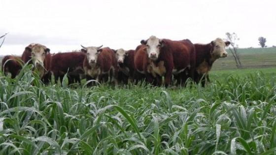 J. Vera: 'Vemos un negocio firme, donde la agricultura y la forestación buscan aliarse con la ganadería' — Ganadería — Dinámica Rural | El Espectador 810