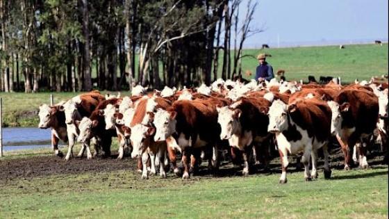 Copagran se suma a Pantalla Uruguay — Ganadería — Dinámica Rural | El Espectador 810