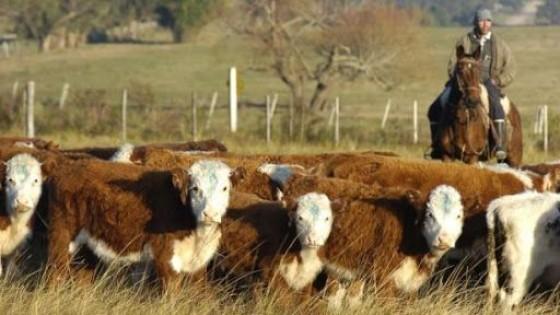 Ganadería bovina: El Índice de Preñez es de 74.9% — Ganadería — Dinámica Rural | El Espectador 810