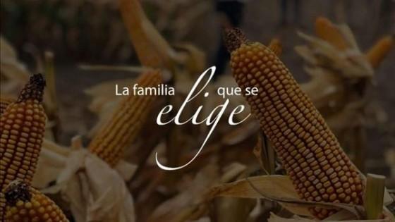 Alianza estratégica: ADP agrega un nuevo producto a su portafolio de cultivos de verano — Agricultura — Dinámica Rural | El Espectador 810