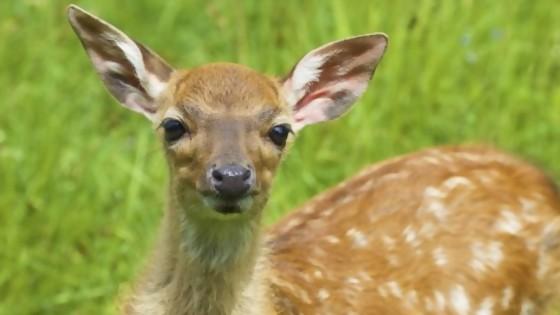Tras de ciervos, cuernos — De qué te reís: Diego Bello — Más Temprano Que Tarde | El Espectador 810