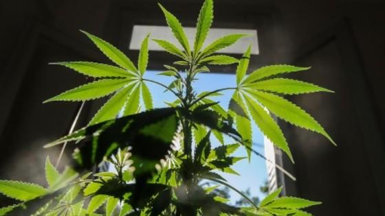 Gobierno: que el cannabis uruguayo se destaque como la carne — Informes — No Toquen Nada | El Espectador 810