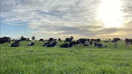 Buena noticia: Fonterra tuvo un aumento en la LPE de 12% — Lechería — Dinámica Rural | El Espectador 810