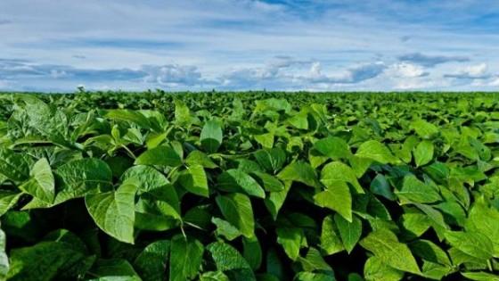 F. Capandeguy: 'Esperamos una zafra de verano desafiante' — Agricultura — Dinámica Rural | El Espectador 810