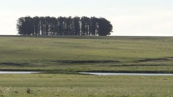 Inmuebles Rurales: Crece interés de empresarios argentinos para invertir en ganadería  — Inversión — Dinámica Rural | El Espectador 810