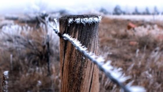 M. Bidegain: 'Es esperable que a mediados de agosto aumenten las temperaturas' — Clima — Dinámica Rural | El Espectador 810