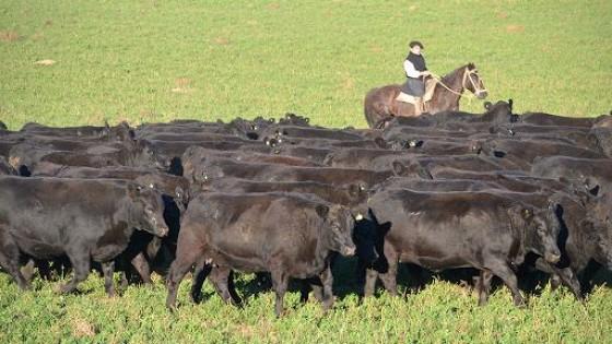 O. Fernández: 'El mercado está firme y con una industria que demanda' — Ganadería — Dinámica Rural | El Espectador 810