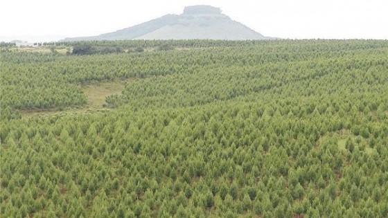 INIA organiza seminario sobre genética forestal — Inversión — Dinámica Rural | El Espectador 810