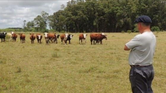 Ganadería: El Plan Agropecuario promueve 'Productor Asociado' — Ganadería — Dinámica Rural | El Espectador 810