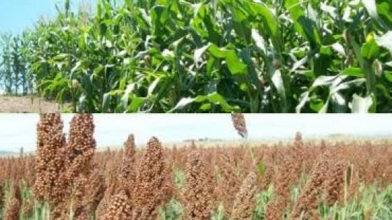 Zafra 20/21: Prolesa promueve portafolio innovador en cultivos de verano — Lechería — Dinámica Rural | El Espectador 810