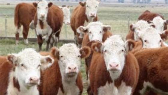 Haciendas: El mercado registró la octava suba consecutiva — Mercados — Dinámica Rural   El Espectador 810