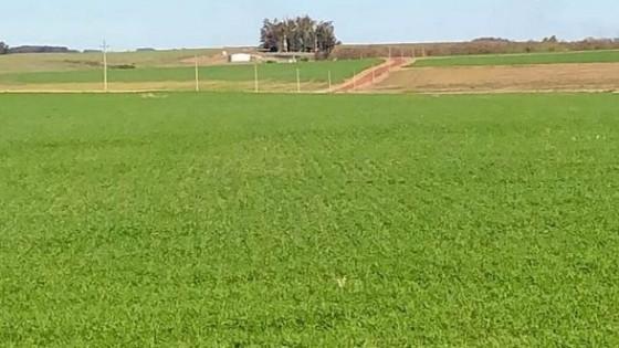 Cultivos de invierno: a pesar de las heladas y las lluvias, la resiembra fue de un 10% — Agricultura — Dinámica Rural | El Espectador 810