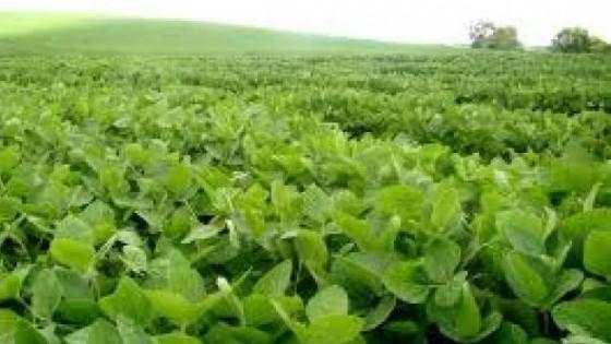 P. Albano: 'El momento de invertir en campos es ahora' — Inversión — Dinámica Rural | El Espectador 810