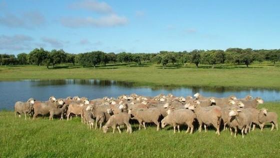 Durante agosto y setiembre, el incentivo cruza de CLU alcanzaría precios hasta 3.60 dólares — Ganadería — Dinámica Rural | El Espectador 810