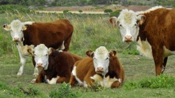 Aporte técnico: Antiparásitos en bovinos, como hacer una correcta dosificación — Ganadería — Dinámica Rural | El Espectador 810