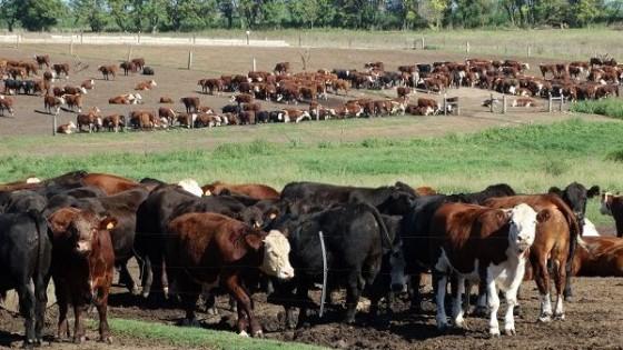 Haciendas: La falta de  lluvias condiciona el mercado, aunque 'los precios son buenos' — Mercados — Dinámica Rural   El Espectador 810