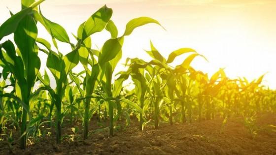 En Argentina el maíz alcanzará 7 millones de hás — Agricultura — Dinámica Rural | El Espectador 810