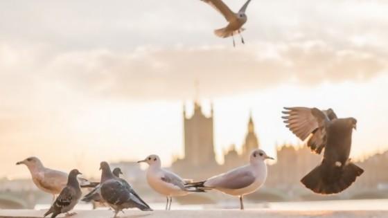 Crónica roja y una paloma suelta — De qué te reís: Diego Bello — Más Temprano Que Tarde | El Espectador 810