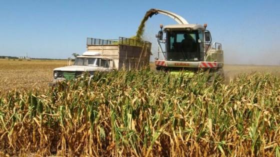 Prolesa destaca 'Plan para ensilaje' — Lechería — Dinámica Rural | El Espectador 810