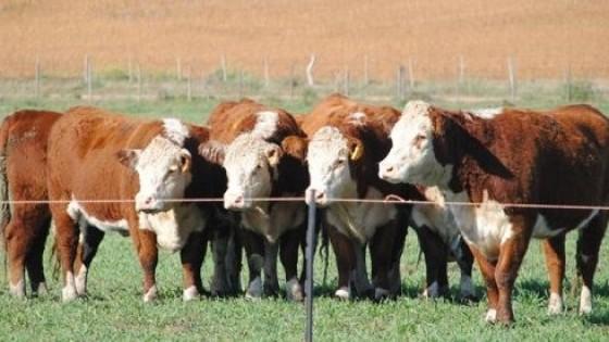 Plazarural: 'El porcentaje de ventas ratificó estabilidad del negocio ganadero' — Mercados — Dinámica Rural | El Espectador 810