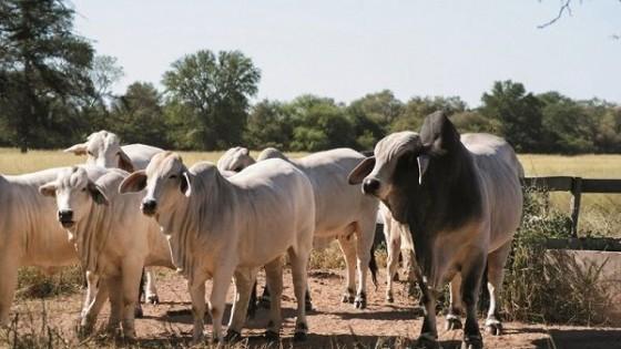 El Chaco paraguayo enfrenta su mayor sequía en 30 años — Mercados — Dinámica Rural | El Espectador 810