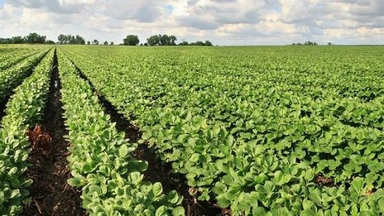 Argentina busca el ingreso de dólares bajando las retenciones — Agricultura — Dinámica Rural | El Espectador 810