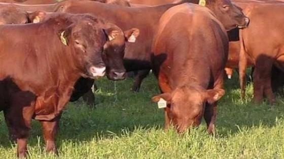 Severi 'pone lo mejor en Limousin y Limangus' — Ganadería — Dinámica Rural | El Espectador 810