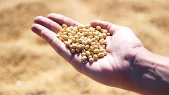 Stocks de soja sorprendieron a operadores, análisis de Celina Mesquida, Broker de RJ O'Brien — Economía — Dinámica Rural | El Espectador 810