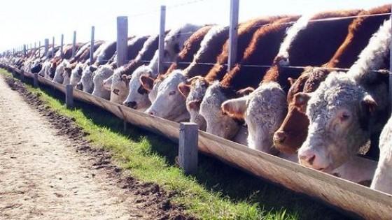 ADP Zone:  Con innovación e investigación es posible una agricultura sostenible, aunque asociada a la ganadería, por la relación costo beneficio — Economía — Dinámica Rural | El Espectador 810