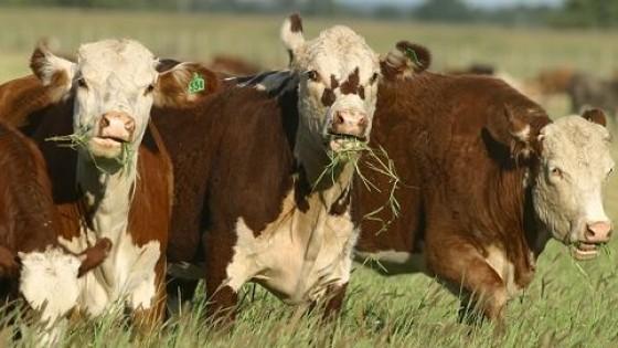 Hay un poco más de ganado preparado, pero con clara posición bajista desde la industria — Mercados — Dinámica Rural   El Espectador 810