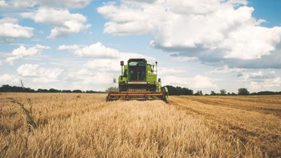 La siembra de arroz avanza a buen ritmo, y supera el 70% del área — Agricultura — Dinámica Rural | El Espectador 810