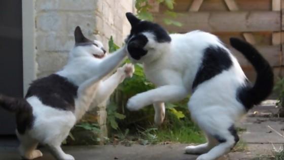 Los gatos traen problemas — De qué te reís: Diego Bello — Más Temprano Que Tarde | El Espectador 810