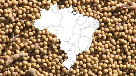 Soja: Las lluvias en Brasil impactaron en Chicago — Economía — Dinámica Rural | El Espectador 810