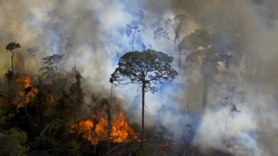 Activistas crean en Brasil plataforma de monitoreo ambiental  — Denise Mota — No Toquen Nada | El Espectador 810