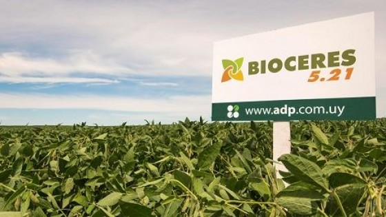 D. Guigou: ''Hemos sembrado el 80% del área de soja de primera'' — Agricultura — Dinámica Rural | El Espectador 810