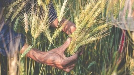 Con la mirada puesta en el clima, avanza la cosecha de invierno — Agricultura — Dinámica Rural | El Espectador 810