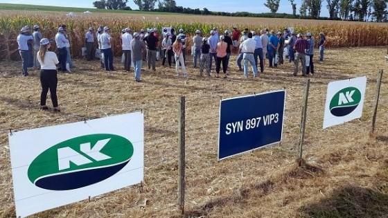 Maíz tardío: Mismo cultivo, distinto ambiente, un enfoque de Yalfín y NK — Agricultura — Dinámica Rural | El Espectador 810